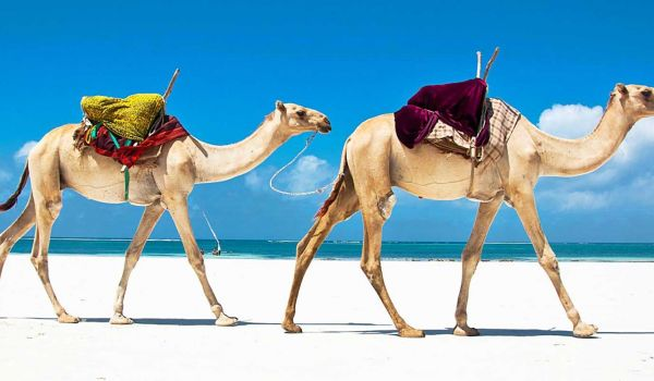 Mombasa 5 days packages SGR packages